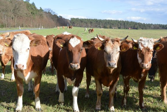 Chambers debates solutions to Beef Crisis for Mayo farmers